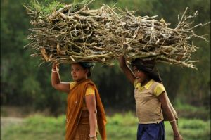 india_rural_firewood