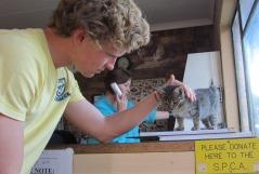SPCA Raoul +kitten