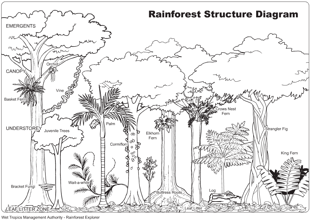 tropical rainforest coloring pages - simple tropical rainforest coloring page coloring pages