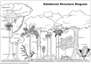 rainforest structure