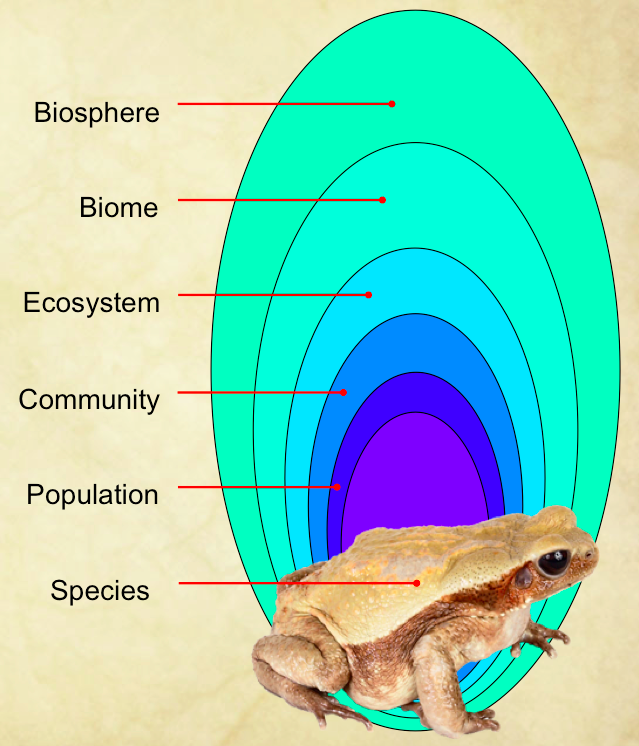What Are The Levels Of Organisation In The Biosphere