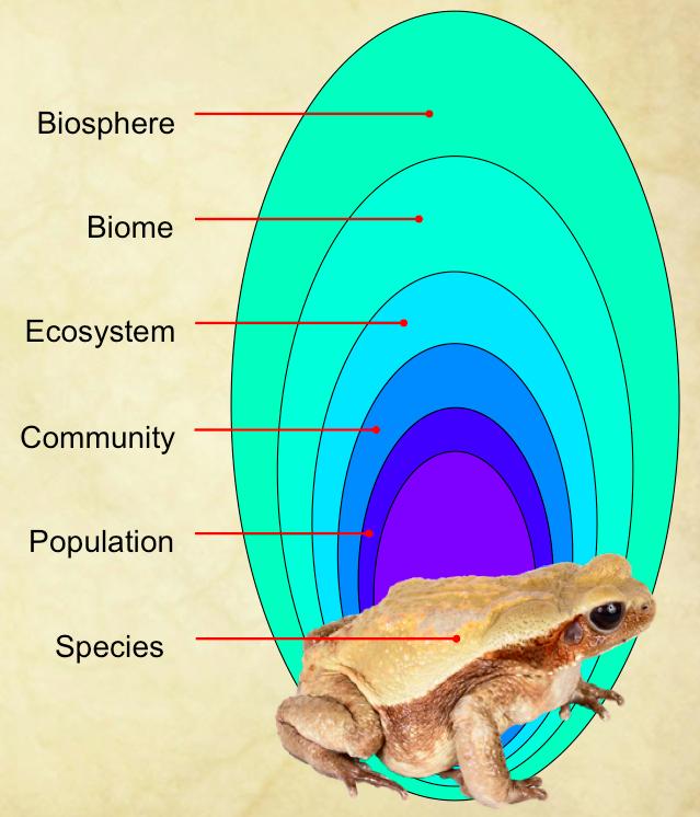 relationship between biosphere ecosystem community and population