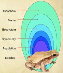 T2 EcoTerminology