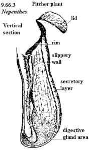Nepenthes.jpeg